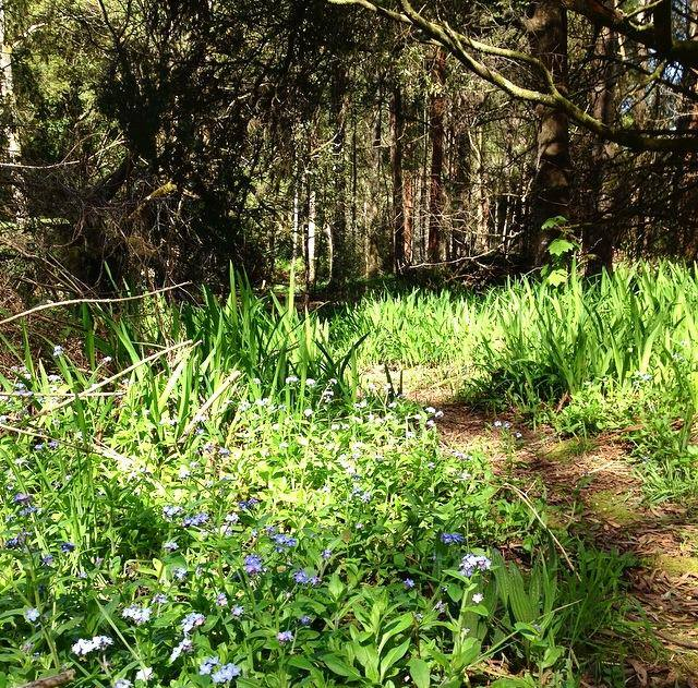 Spring Equinox in Sherbrooke Forest by Sacred Familiar