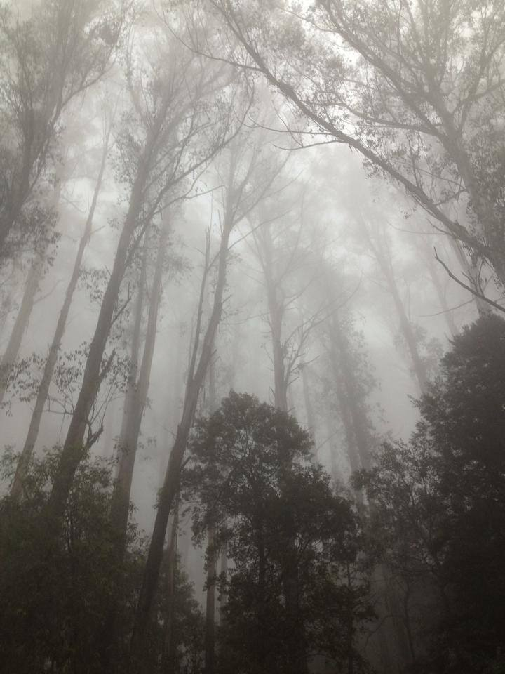 Spring Mist at MT Donna Buang by Sacred Familiar