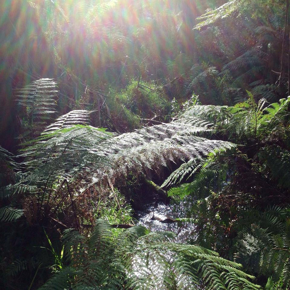 Fern in Sherbrooke Forest by Sacred Familiar