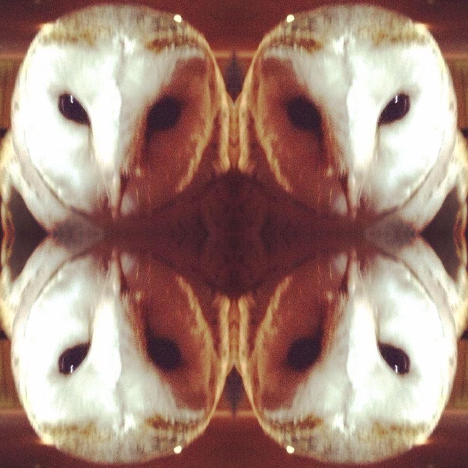 Barn owl  - Sacred Familiar