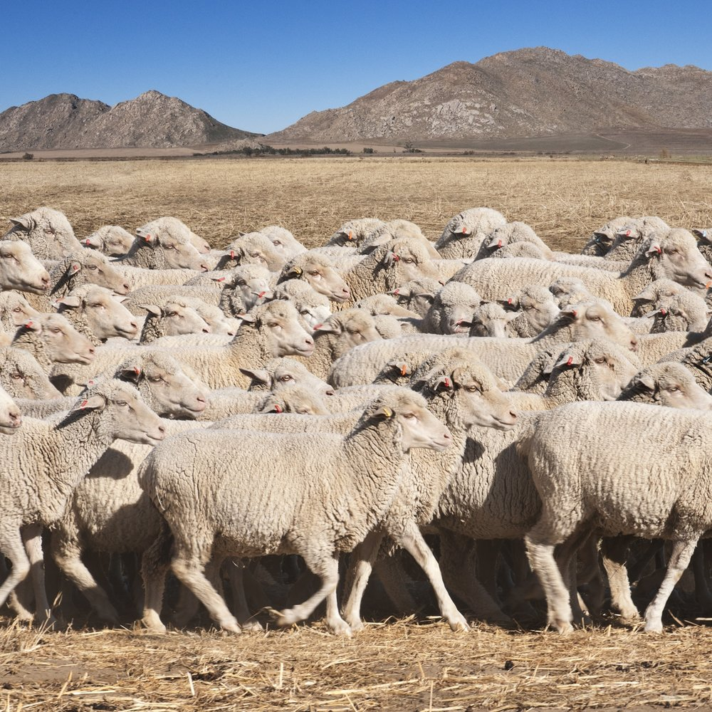 young-shepherd-venicearts.jpg