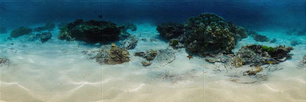 reef 1x3.png