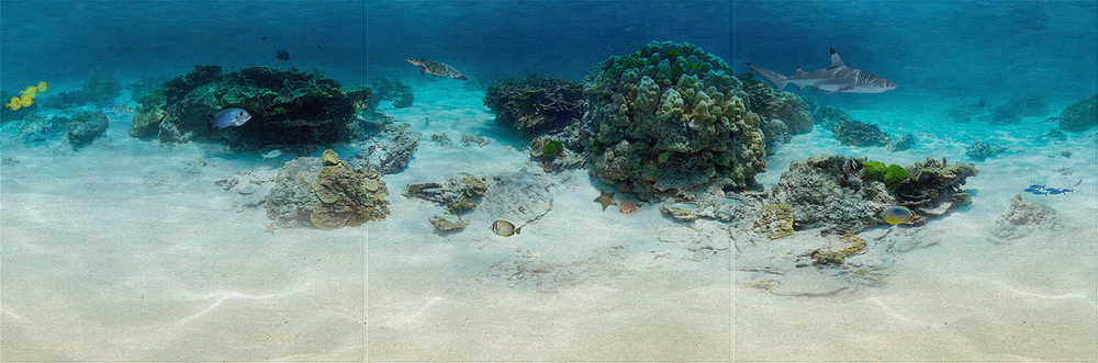 ocean reef 1x3.png
