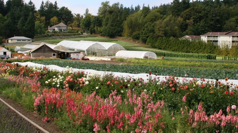 RTCNW18_Joes-Gardens-2.jpg
