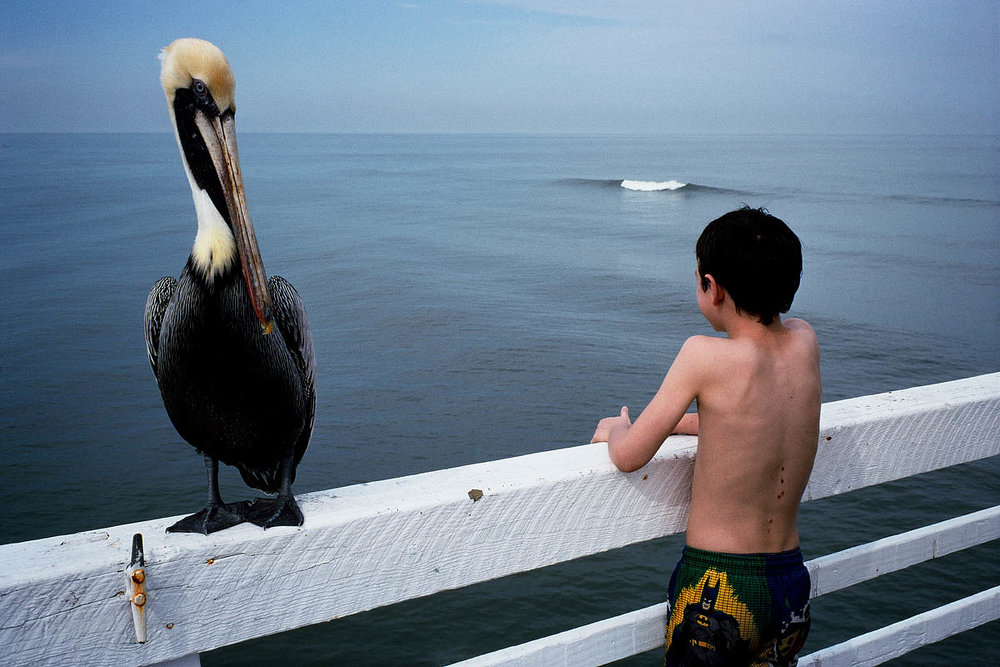 Photo © Constantine Manos   Analyzing the layers of this photo, I start with the giant bird with the head turning towards the boy; then the boy looking to the sea wear a wave is rolling back towards the bird. This creates a triangular composition.