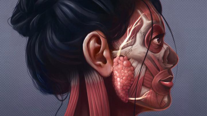 superficial facial nerves by Dr Ciléin Kearns, artibiotics.com