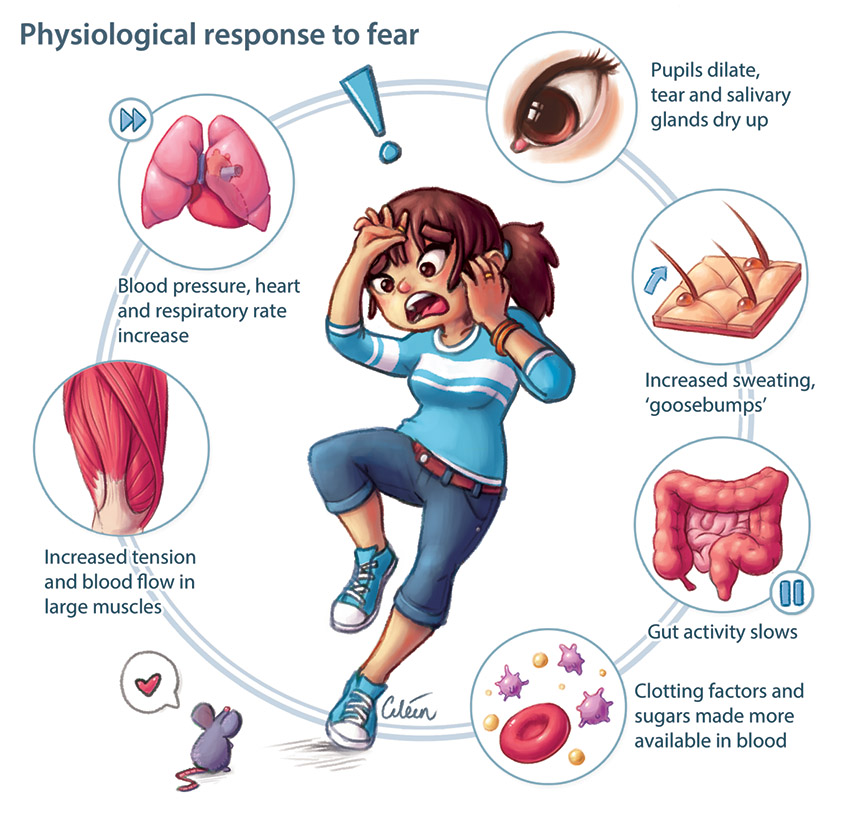Physiological effects of fear by Dr Ciléin Kearns