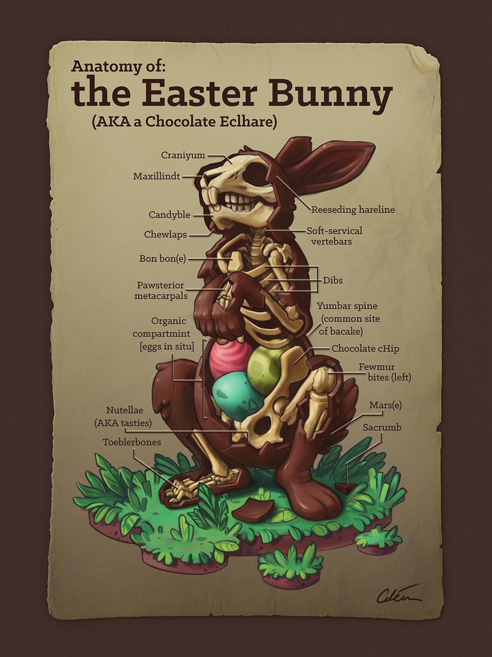 Anatomy of the Easter Bunny, by Dr Ciléin Kearns (artibiotics)