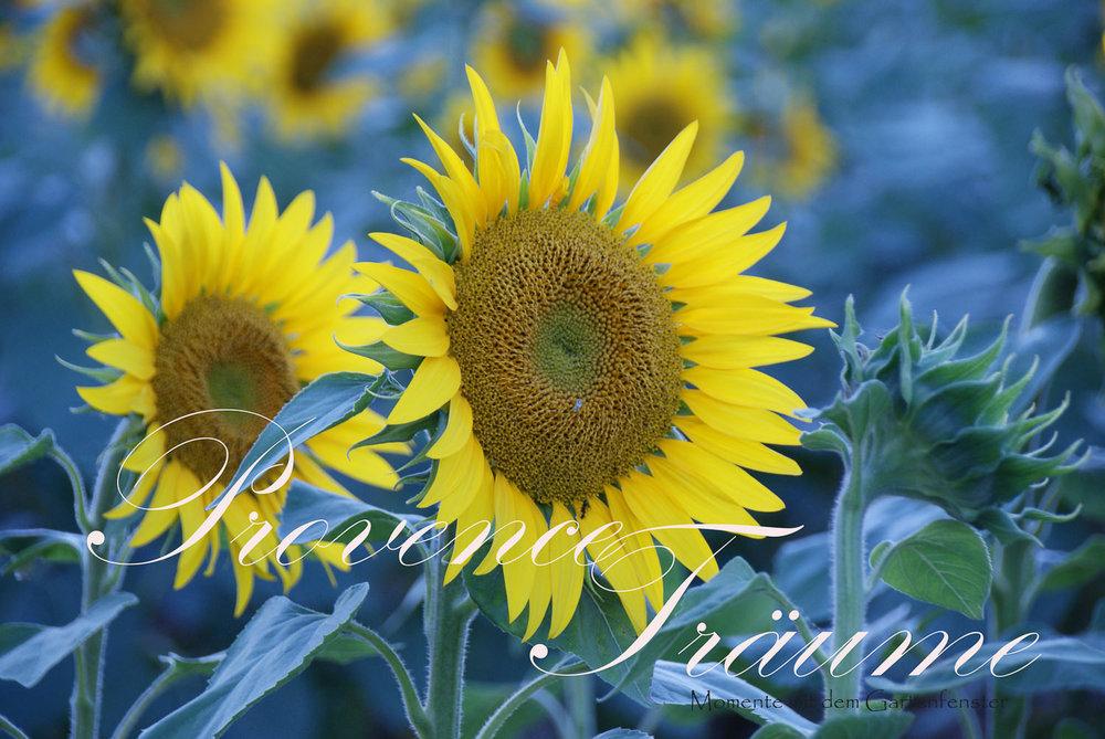 072_Lavendel Provence Gartenfenster.jpg