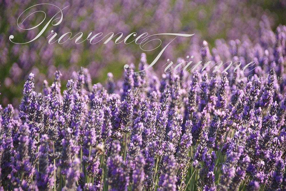 084_Lavendel Provence Gartenfenster.jpg