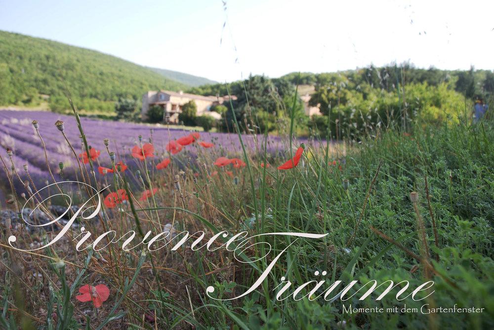 088_Lavendel Provence Gartenfenster.jpg