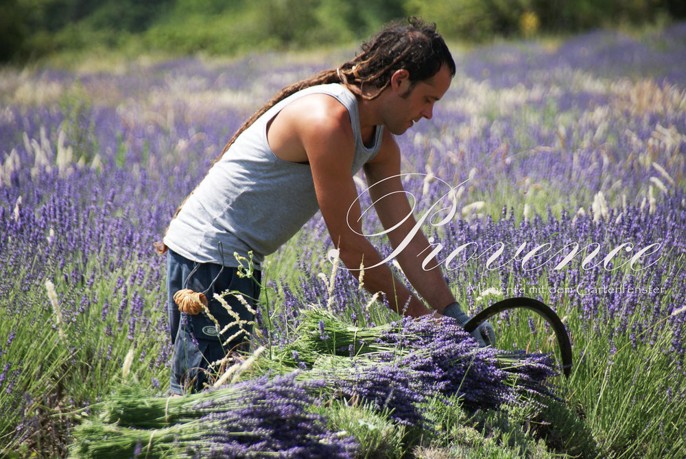 089_Lavendel Provence Gartenfenster.jpg