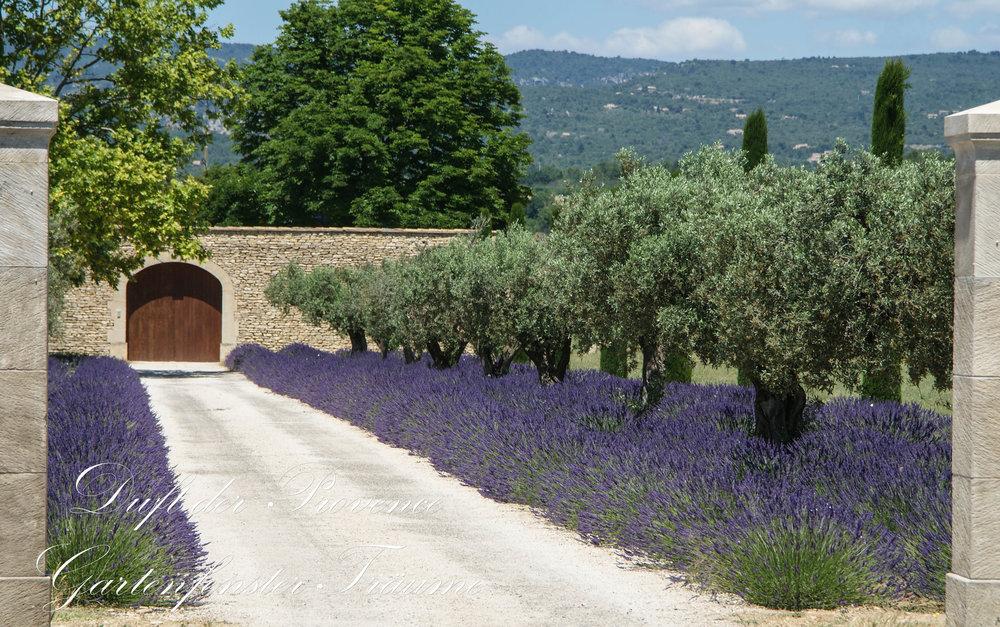 Provence2013-7.jpg