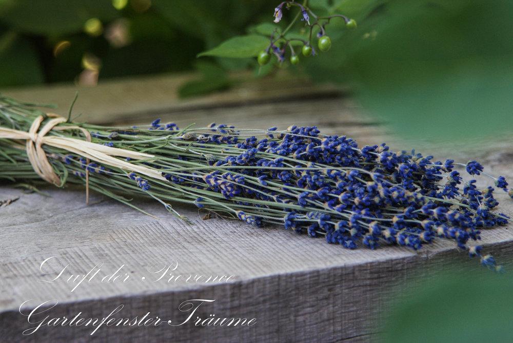 Provence2013-10.jpg