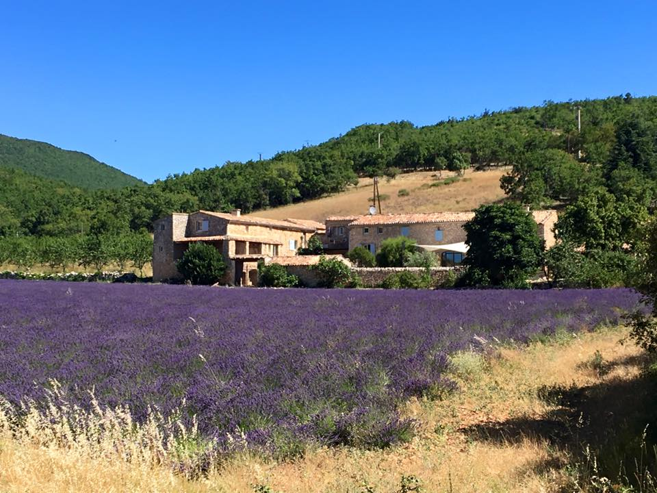 Gartenfenster Lavendel Provence (25).jpg