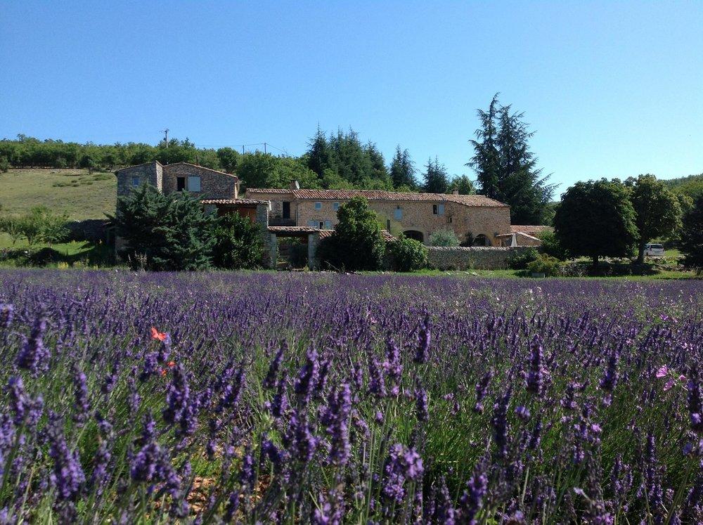 Gartenfenster Lavendel Provence (4).jpg
