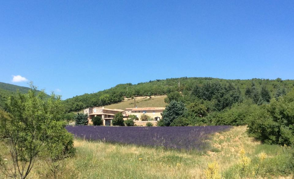Gartenfenster Lavendel Provence (14).jpg