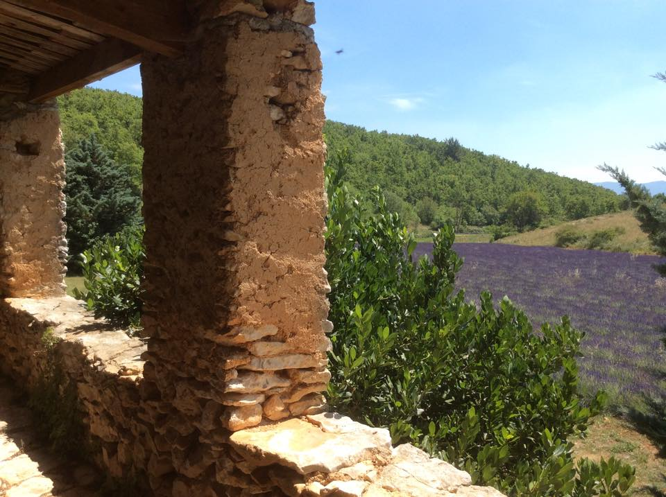 Gartenfenster Lavendel Provence (15).jpg