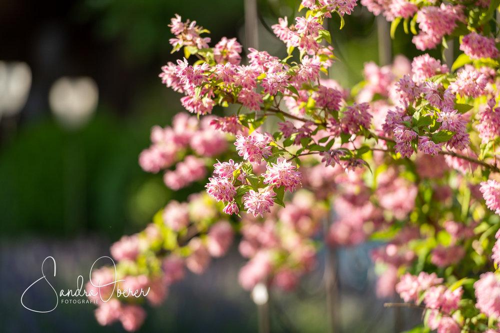 124_850_5787_Gartenfenster-Sommerfest.jpg