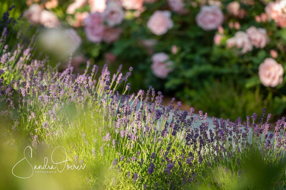 114_850_5771_Gartenfenster-Sommerfest.jpg