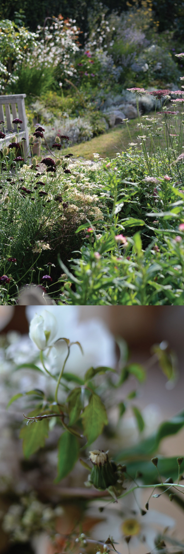 IKOFLOWERS - In den ersten 2 Jahren bin ich viel gereist. Der Blumenhunger war riesig und ich wollte von den großen internationalen Floristen lernen, die wilde, ungezähmte Arbeiten kreieren.Mit dieser neuen Art zu gestalten, entstand ein neues Bedürfnis.Ich sehnte mich nach Blumensorten, die ich im Großmarkt gar nicht bekam und das meiste gezüchtete sprach meine Sinne wenig, oder gar nicht an.Also legte ich einen eigenen Schnittblumengarten an und erweitere mein Wissen und seine Beetflächen ständig… (ich verhandle jedes Jahr mit meiner Familie, um noch etwas Rasen gegen Beete zu tauschen…)Wenn ich mich frage, was der Sinn von all dem ist, so hoffe ich, in unserem Land, in meinem Umfeld, die Perspektive auf die Arbeit mit Blumen und am liebsten die komplette Floristik zu verändern.Floristik ist in Deutschland eine Industrie, die mit Natur arbeitet und dabei Natur zerstört und krank macht.Ich möchte das verändern.Wir brauchen weder Folie, noch Steckschaum, noch Blattglanz, oder Rosen aus Ecuador. Von den vielen Pestiziden gar nicht zu sprechen.Es gibt inzwischen Blumenparfum, weil bei vielen Züchtungen der Duft verloren gegangenen ist.In meiner Art mit Blumen zu arbeiten, erlebe ich immer wieder, das die Natur uns reich beschenkt. Alles ist in Fülle vorhanden. Es ist an uns hinzusehen und ein bewußtes Leben zu führen.Und das will ich versuchen.Doch zum Schluss sei noch gesagt: Ohne meinen Mann, der mich immer bekocht und einfach alles gut findet, was ich mache, meine Kinder, die mich mit einem großen Leuchten umgeben, meine Freundinnen, meine Familie, und all die anderen leuchtenden Seele, denen ich begegnet bin, wäre das alles nur Erde und Pflanzen. Und ich bin dankbar, dass ich beides um mich habe. Menschen und Pflanzen.