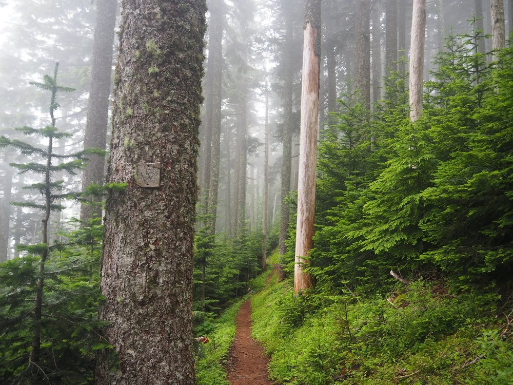 Somewhere in Oregon, where the forests are buzzing with life.