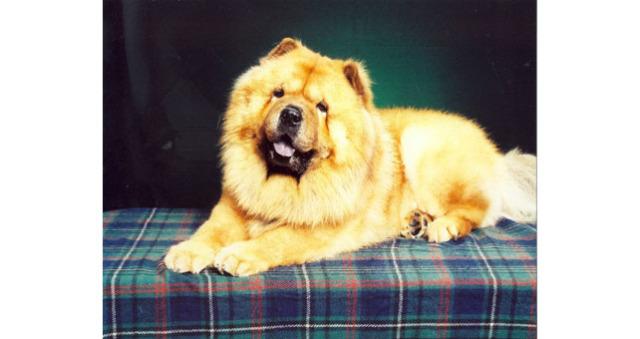 Tedi Bear