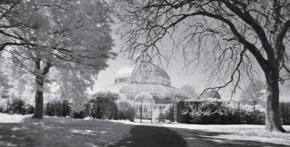 Palm House Infrared.jpg