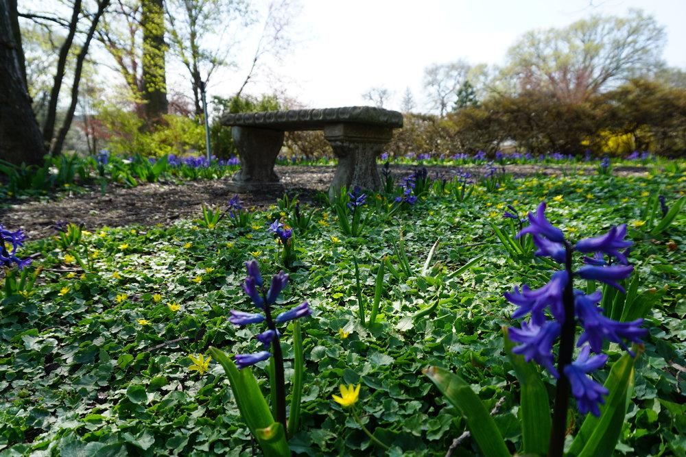 Sherwood Gardens flowers and bench.JPG
