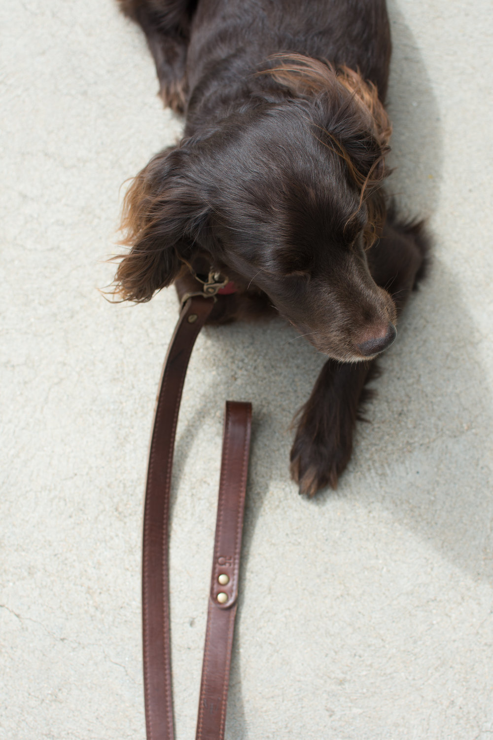 brown leather dog leash3.jpg
