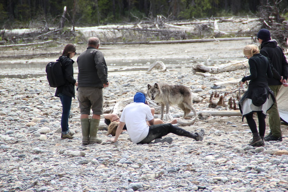 We had a REAL wolf there on set. British Columbia, Canada.