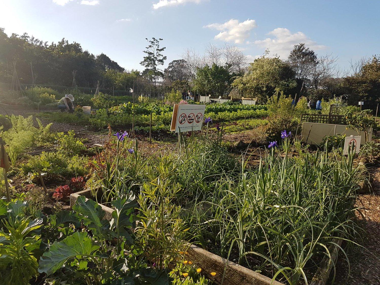 The Sanctuary is Safe celebration — Sanctuary Gardens Mahi Whenua