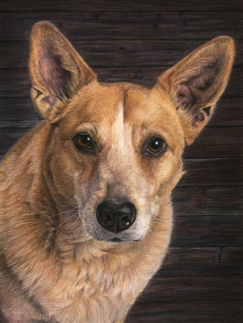 Colored Pencil - Realism and detail