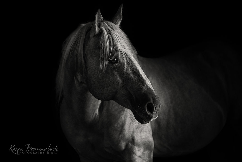 Horses — Karen Broemmelsick Photography and Art