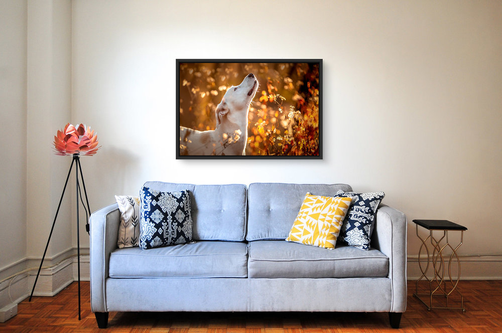 Wall Art - Choose from framed prints, framed canvases and original oil paintings.Starting at $1000