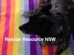 rescueresourcensw - logo.jpg