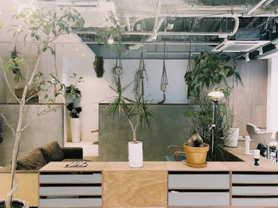 少し植物を減らし、バランスを組み直してみました。