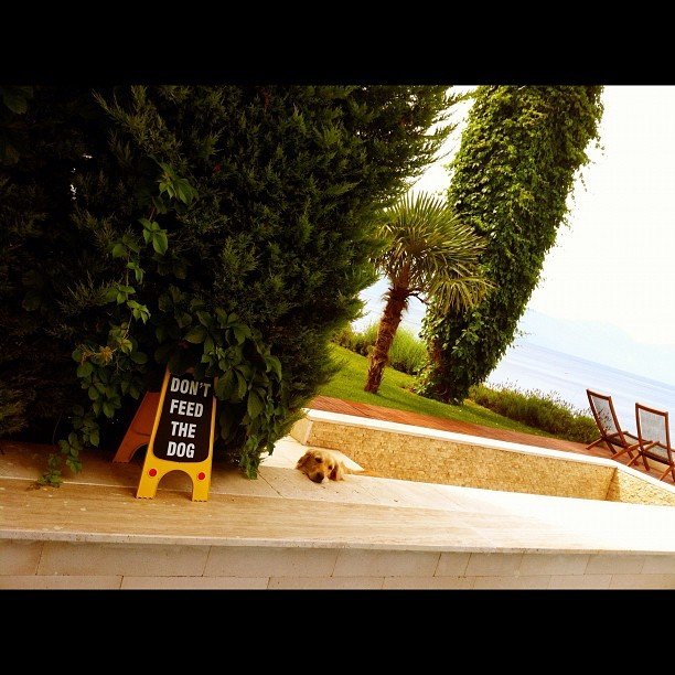 Don't feed this dog in Kusadasi, cos it might stop sulking. #dog #turkey #beach #kusadasi #funny #cute (Taken with  Instagram )