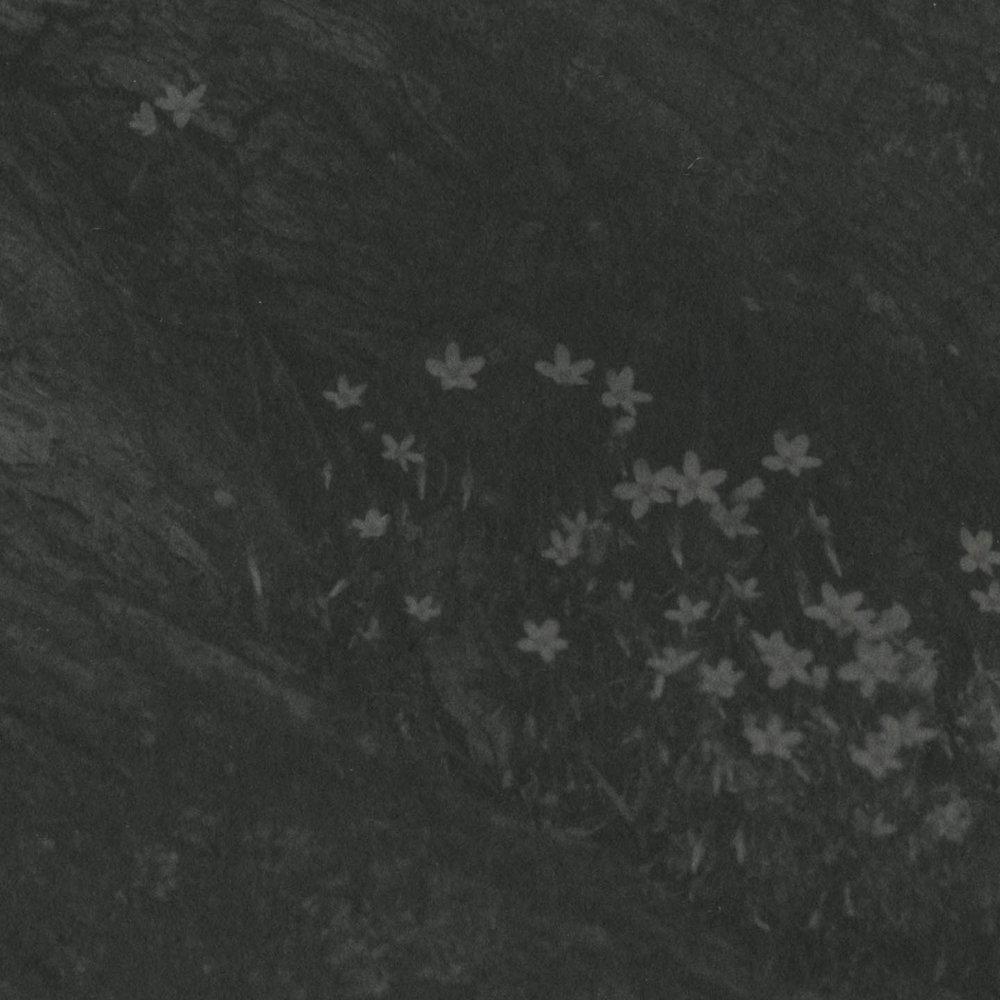 20170515-Prints_022-2.jpg