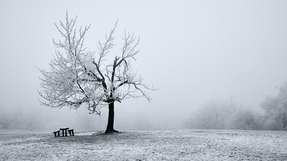 Winter in Buda Hills, Budapest