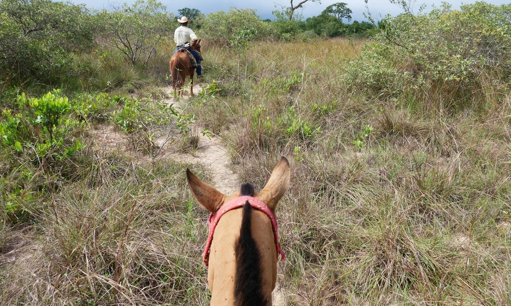 Horse riding through the savannah