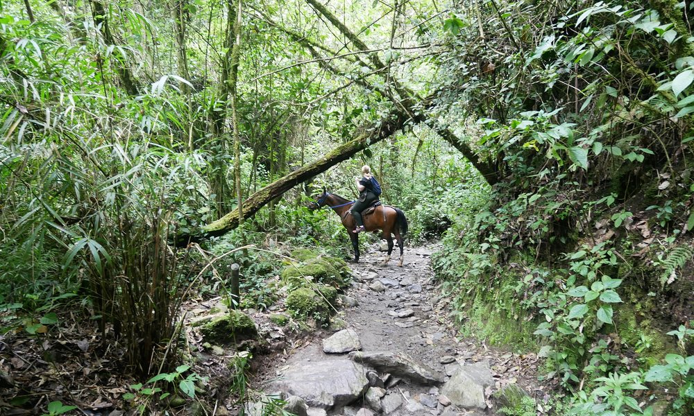 Horse riding through the Cocora Valley