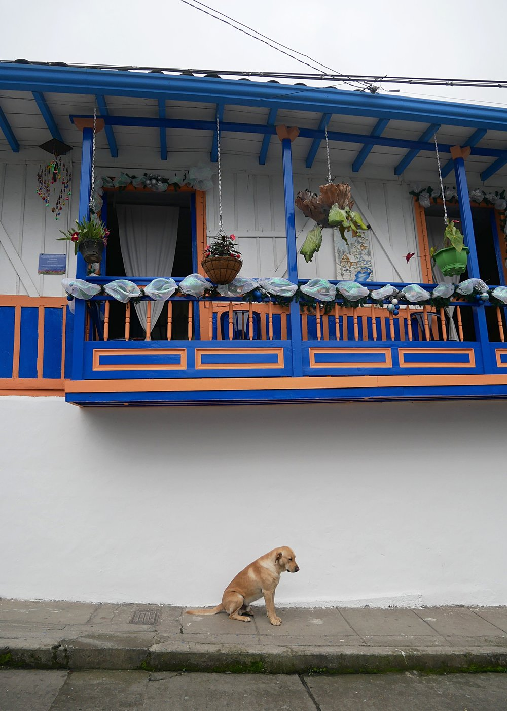 The colourful streets of Salento - adorable dogs included