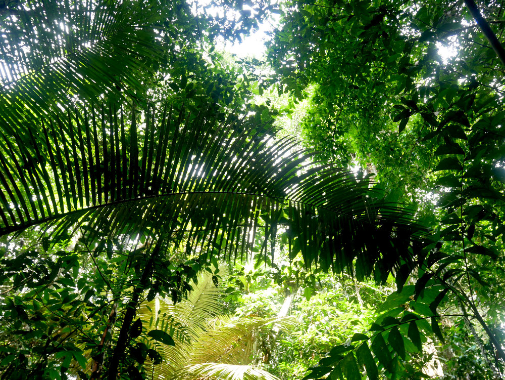 That oh-so-leafy leafy rainforest