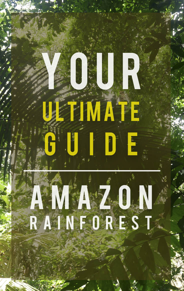 Your Ultimate Guide to the Amazon Rainforest