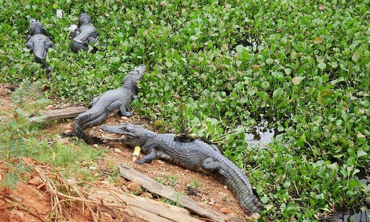 pantanal,brazil