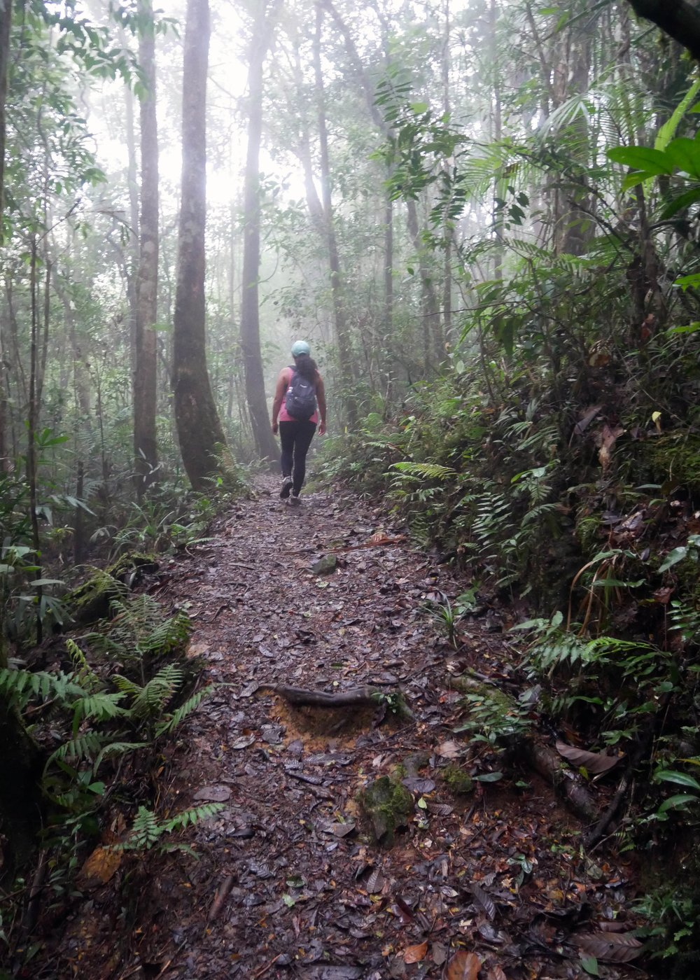 Mount Kinabalu cloud forest, Borneo