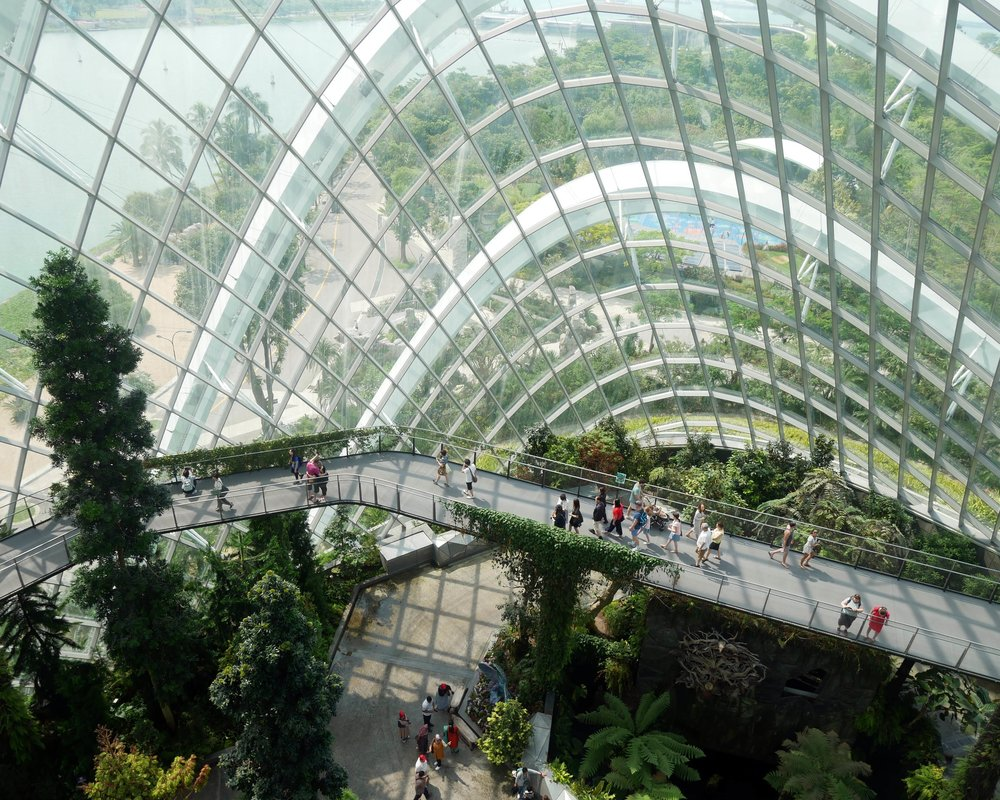 Cloud Forest Dome from the top