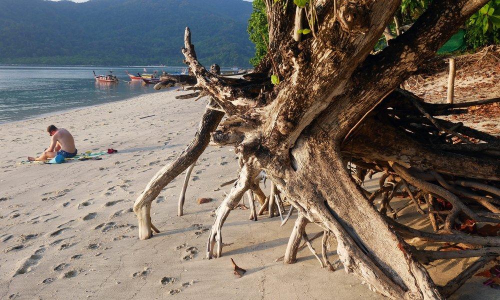 Tree trunks on Sunset Beach