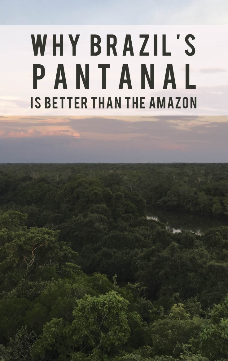 Why Brazil's Pantanal Is Better Than The Amazon